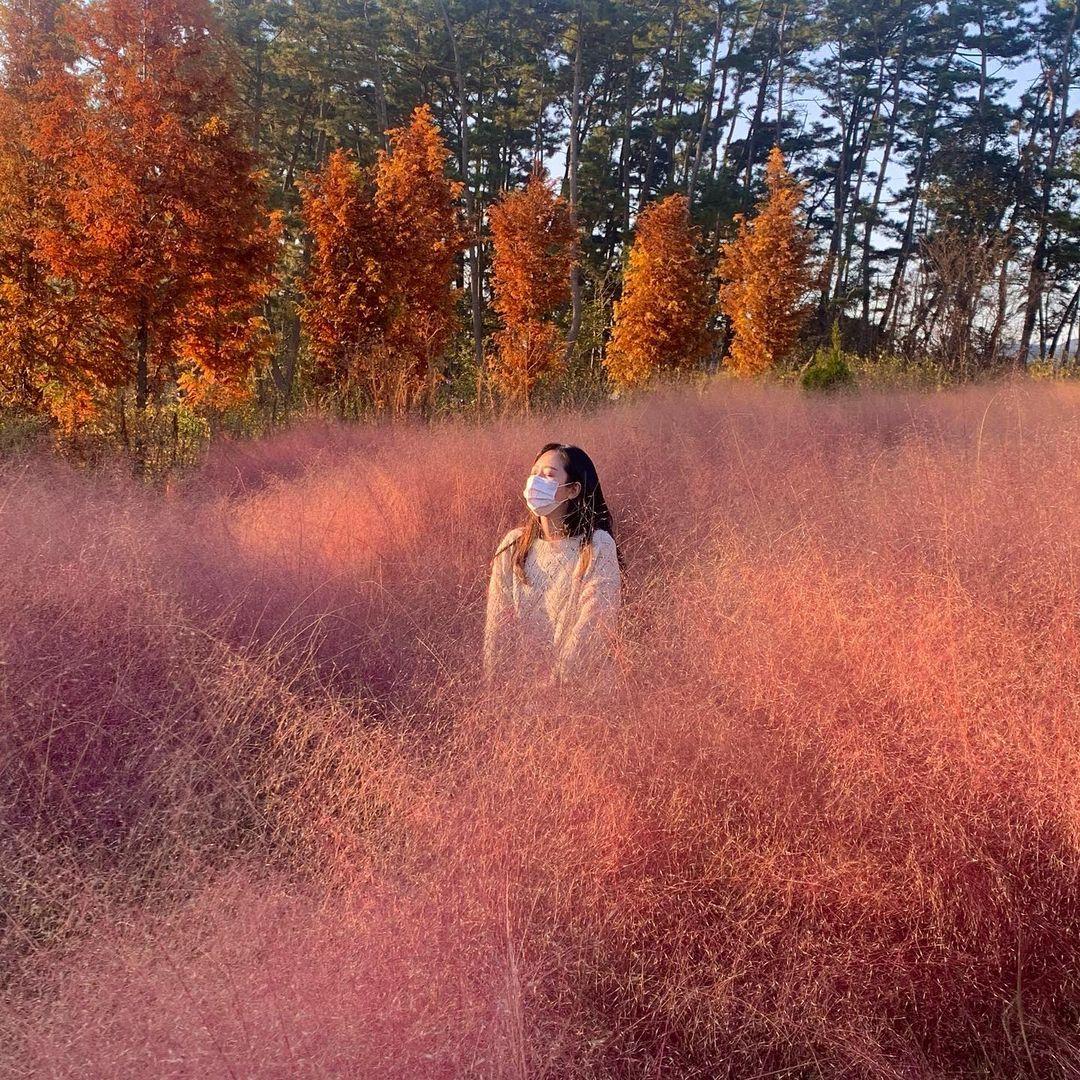 청산수목원 핑크뮬리와 인증사진