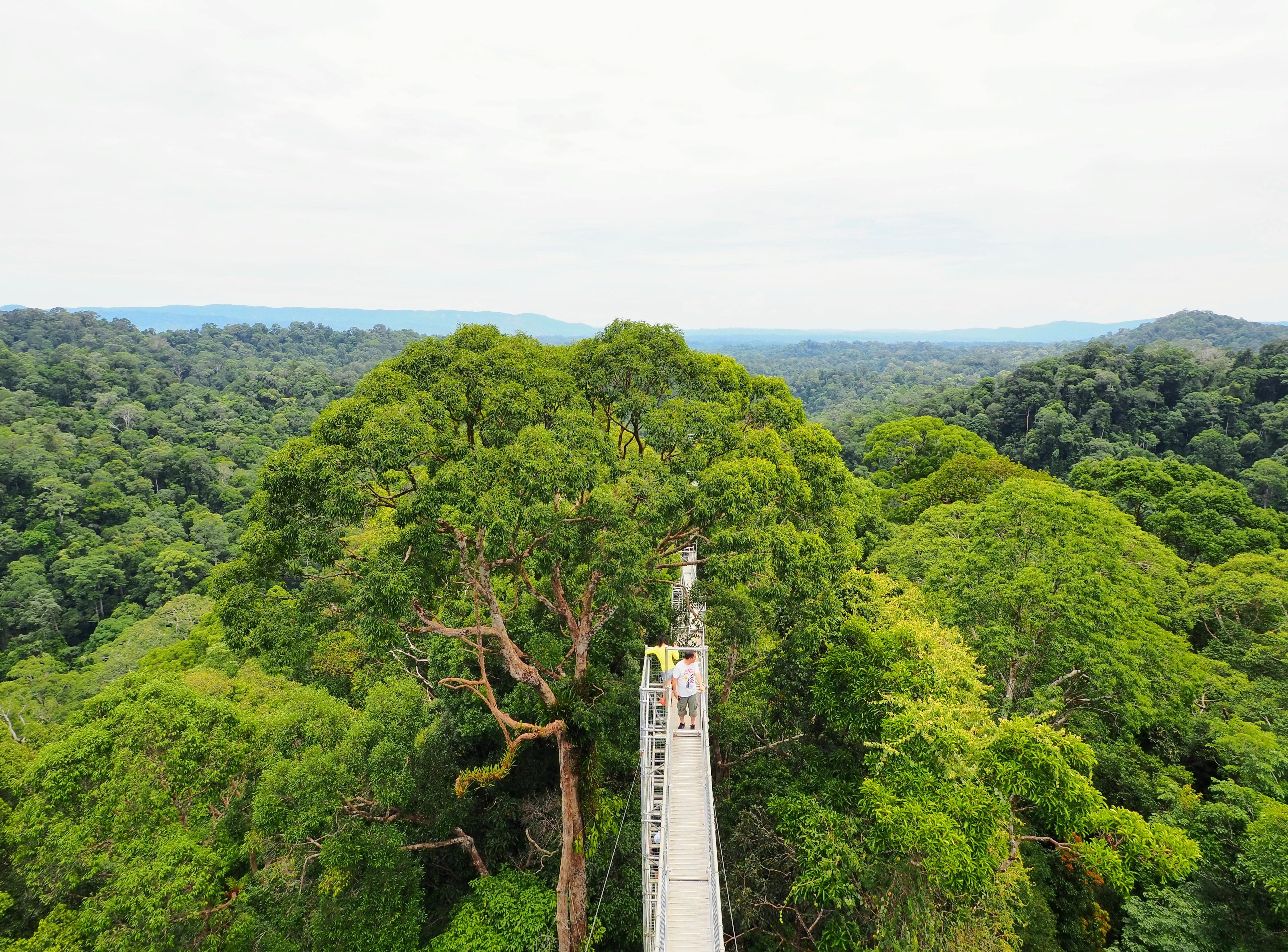 42미터 위에서 내려다본 템부롱 국립공원