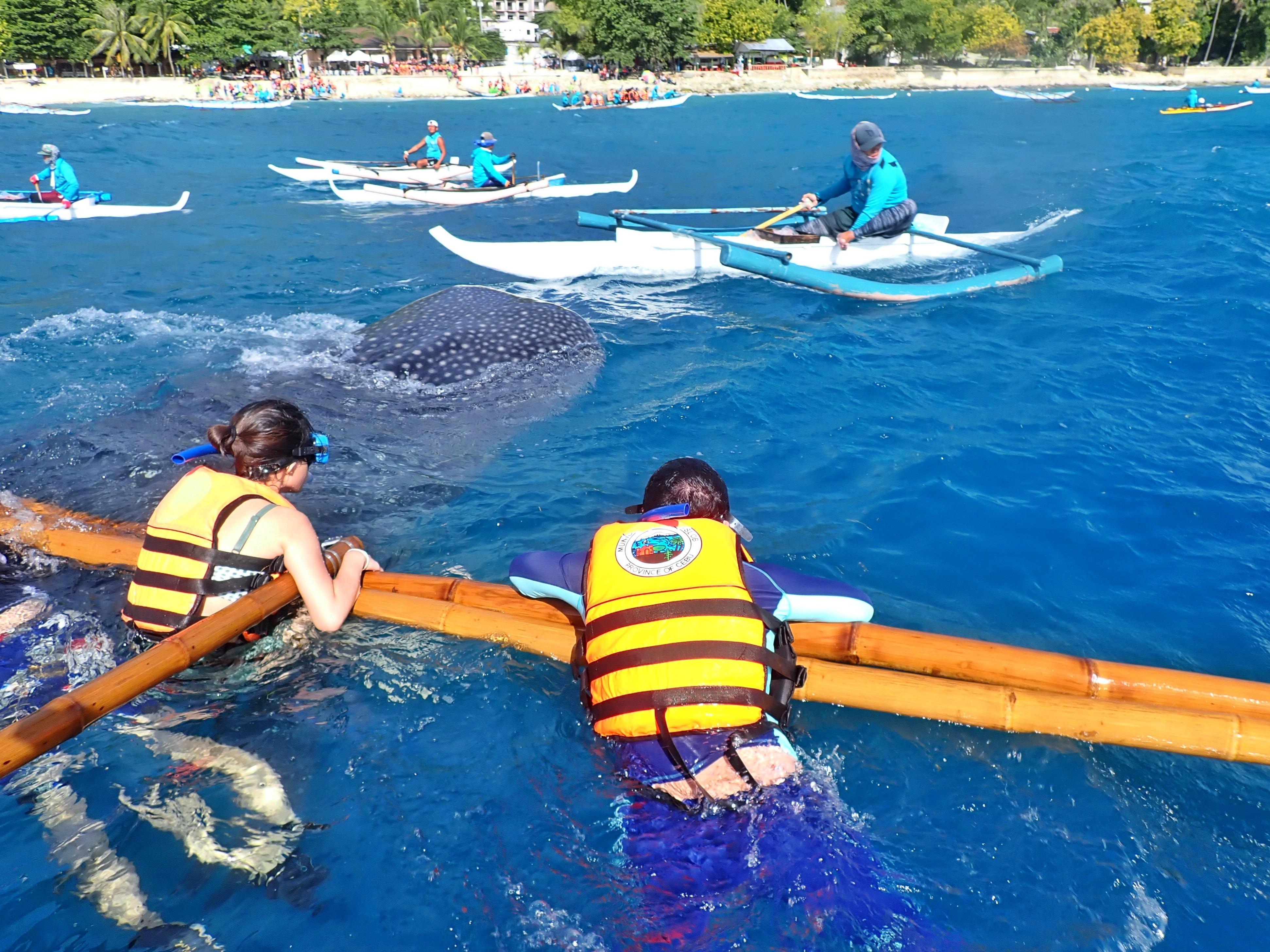 배 위에 매달린 사람과 그 앞을 지나는 고래상어