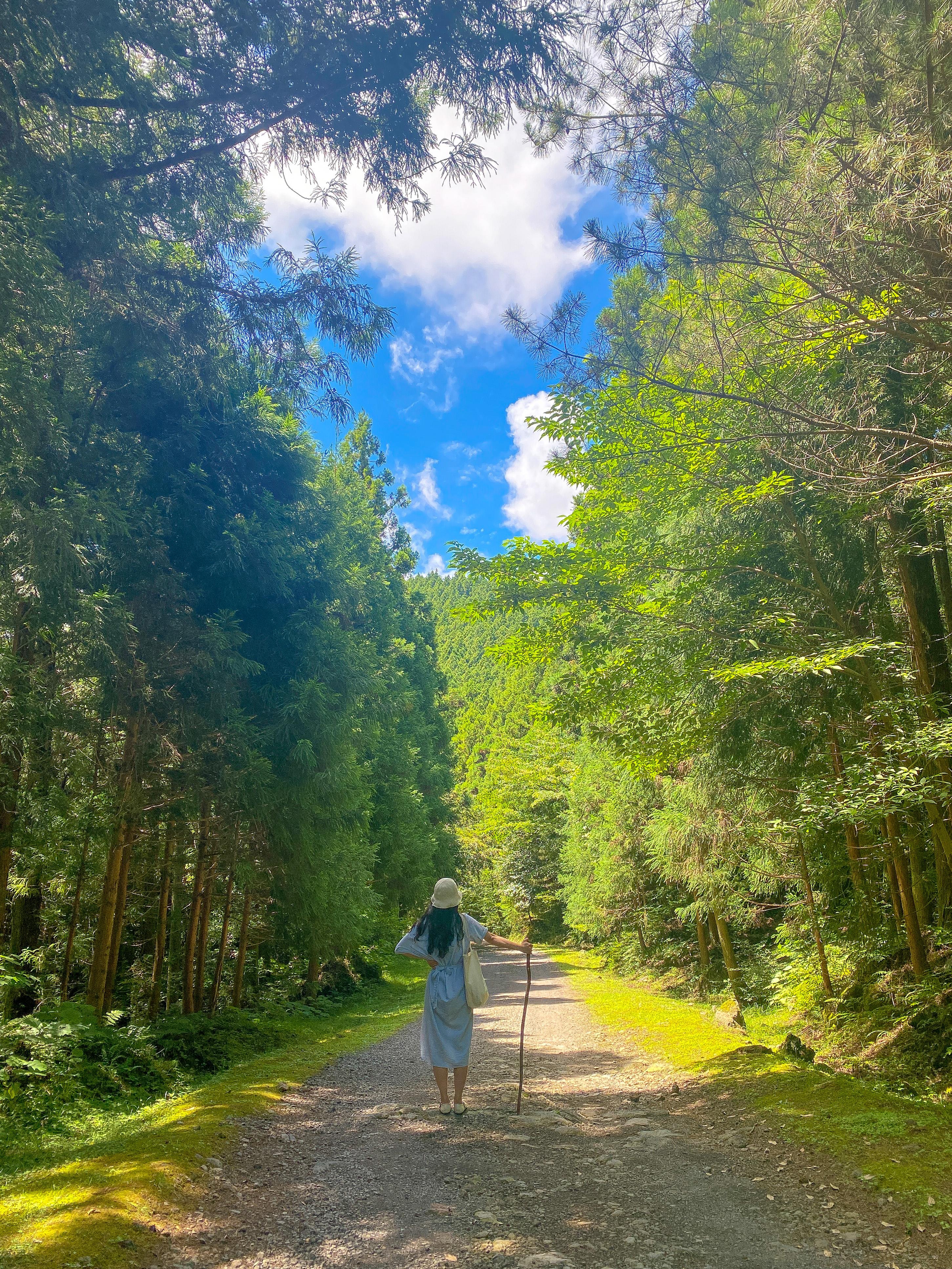 본격적인 숲 탐방 시작