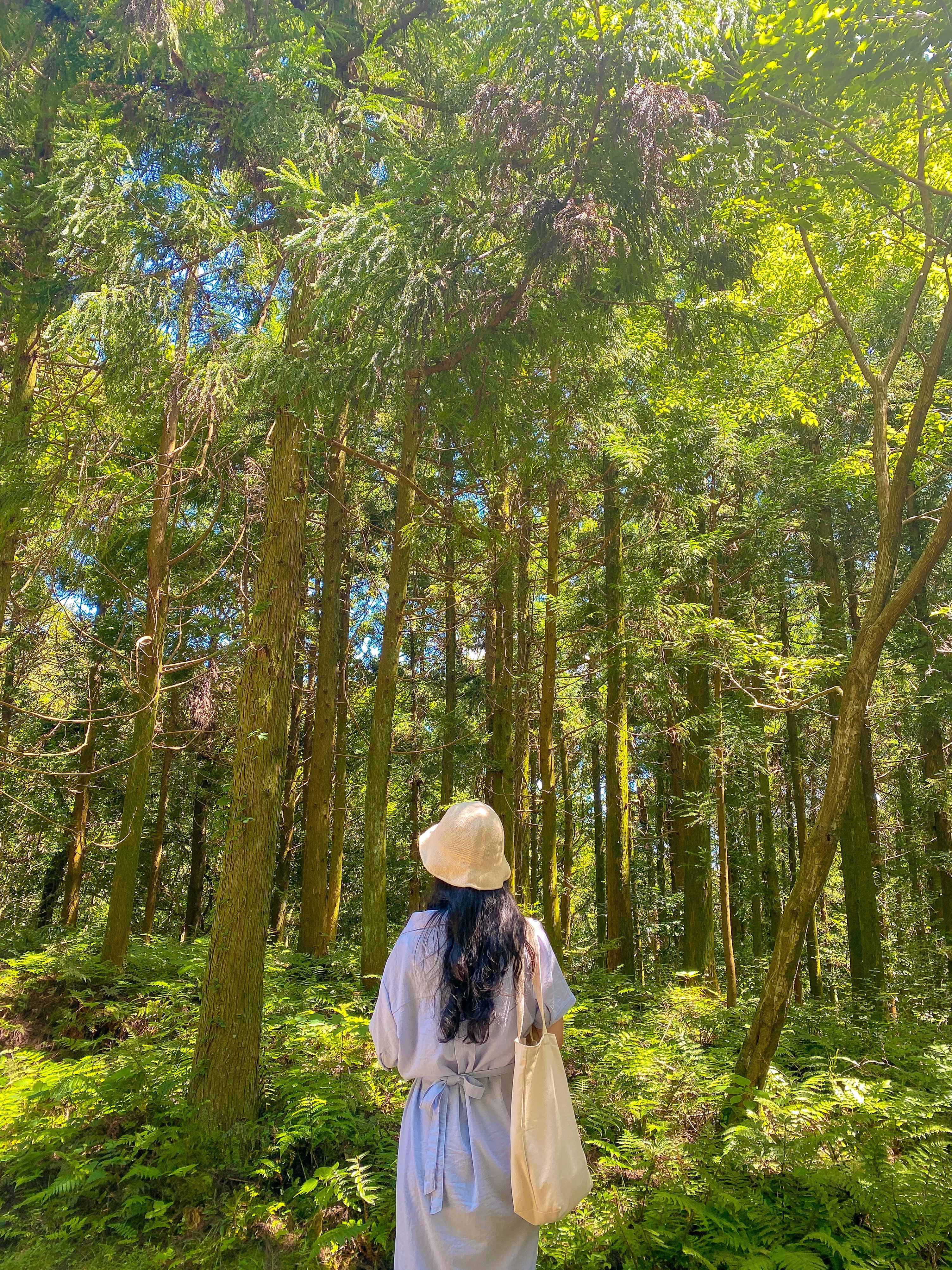 신비롭고 아름다운 숲