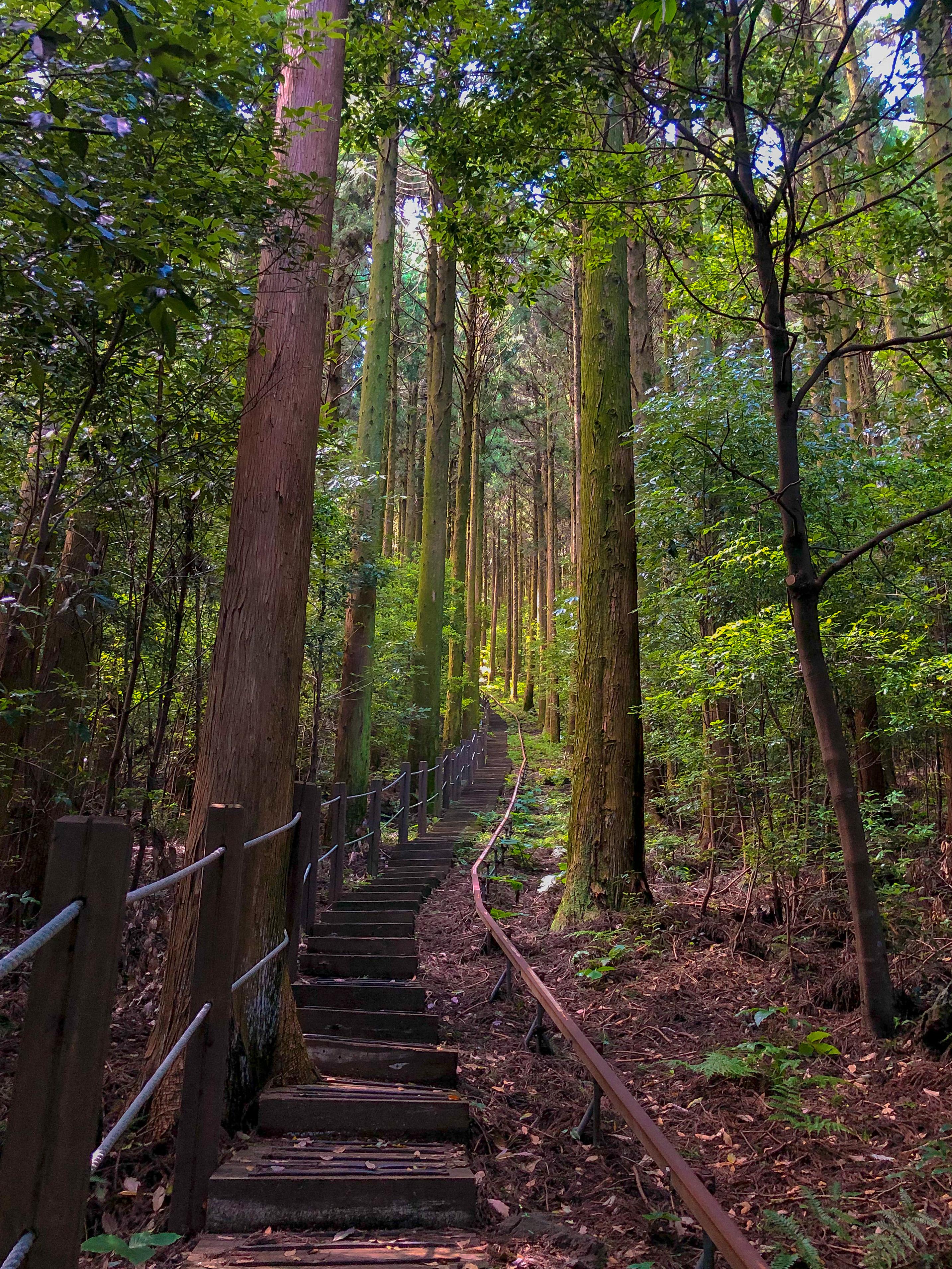 한남시험림 내 숲 길 중 하나
