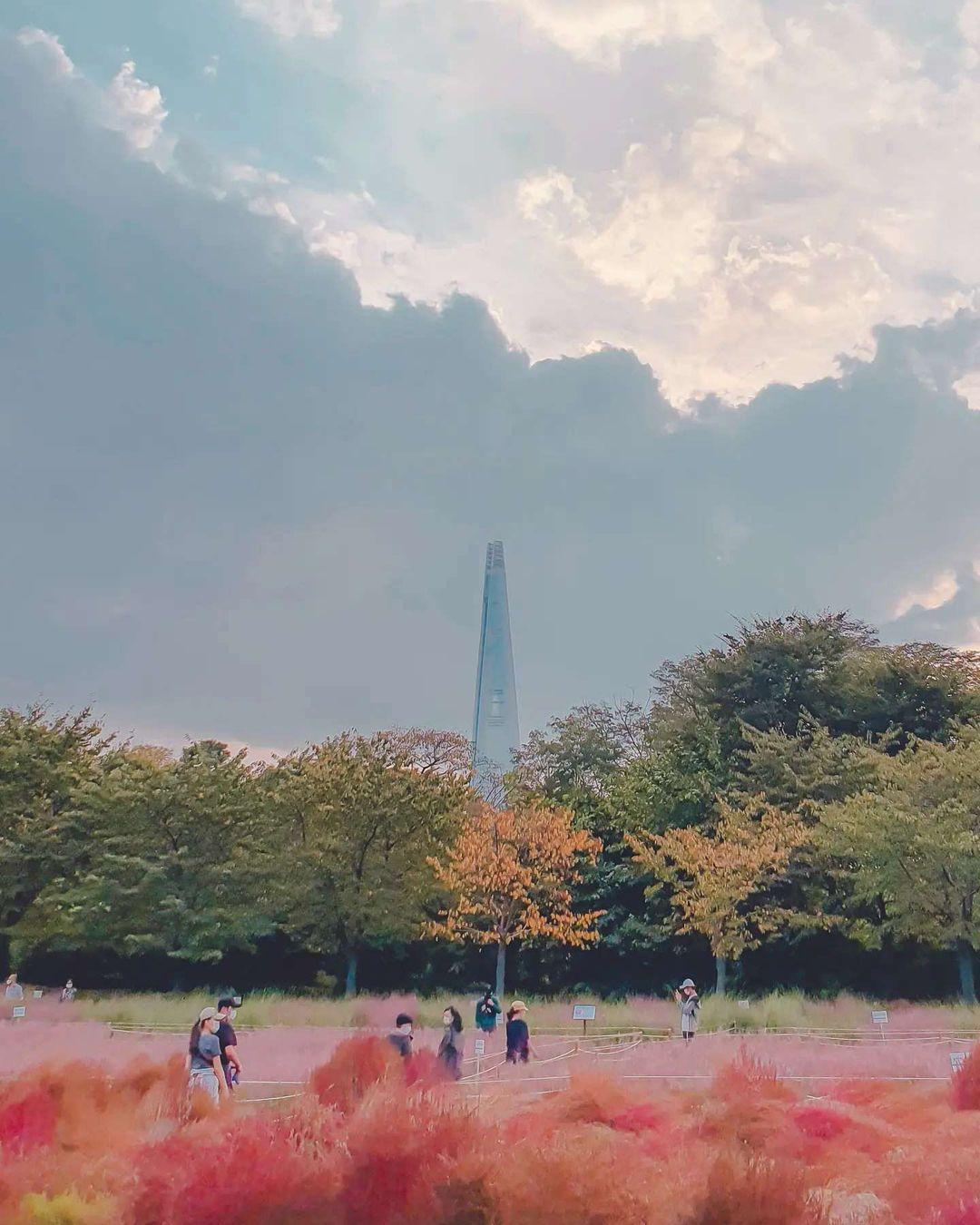 올림픽공원 핑크뮬리와 롯데월드 타워를 한 앵글에
